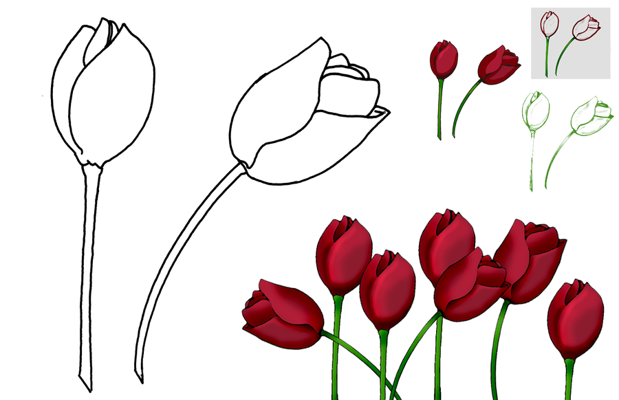 Tulip PNG Outline - 81448