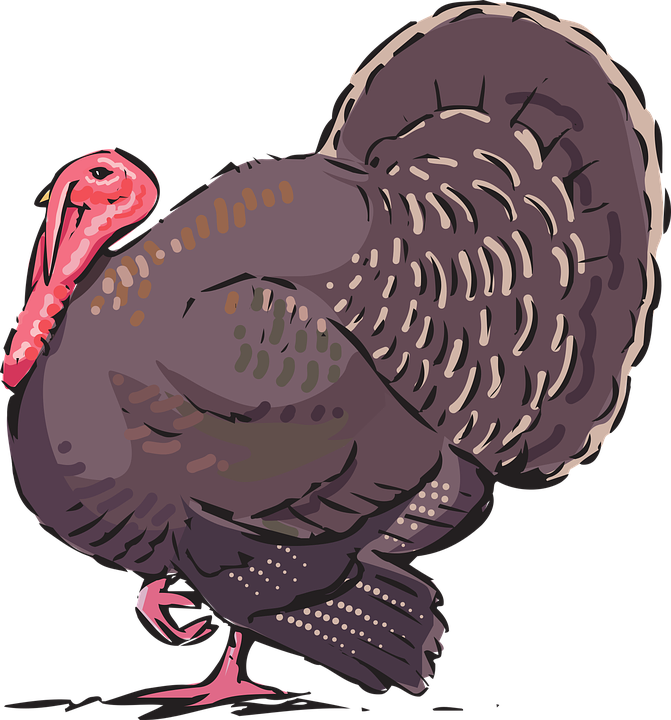 Turkey, Animal, Farm - Turkey Bird PNG