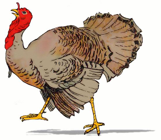 Turkey Bird PNG - 26849