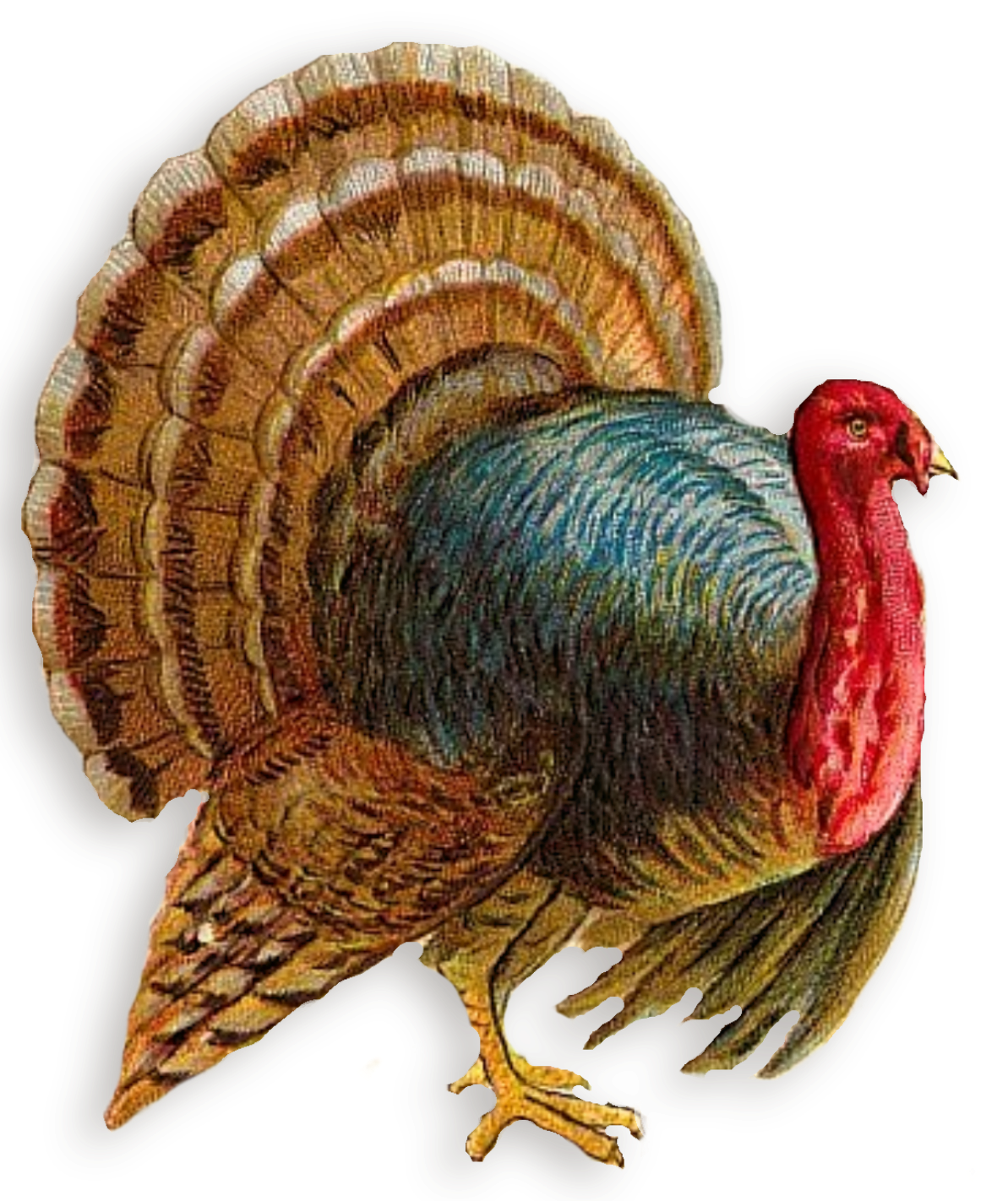 Turkey PNG Clipart - Turkey Bird PNG