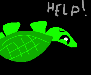 Turtle on its Back needs help - Turtle On Its Back PNG