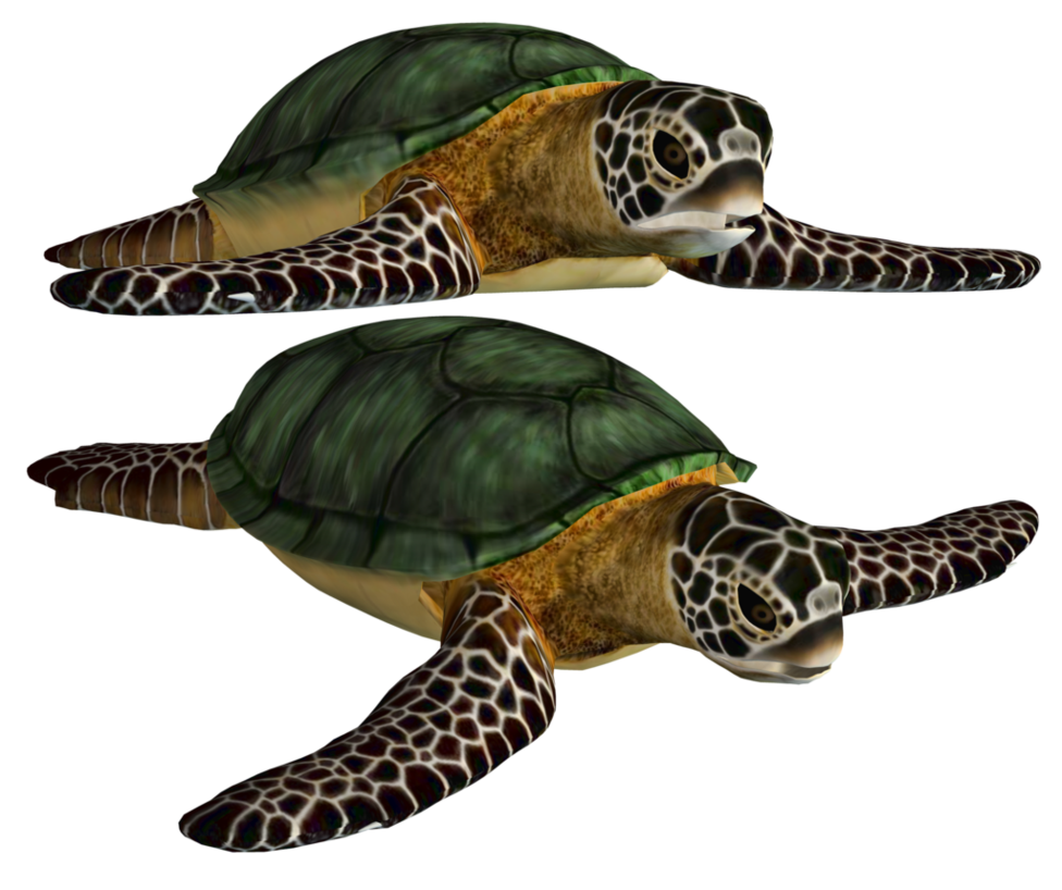 Turtle PNG - 24632