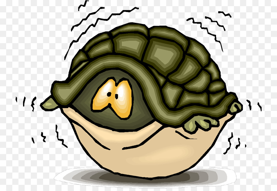 Turtle shell Sea turtle Clip art - fear - Turtle Shell PNG HD