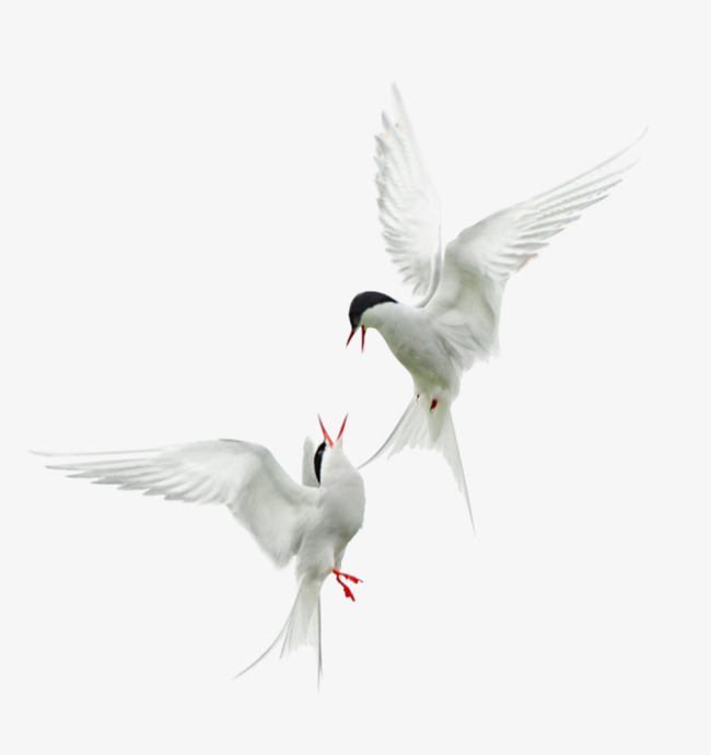 Two birds flying, Birdie, Dancing, Png Material PNG Image and Clipart - Two Birds PNG Black And White