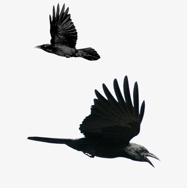Two birds flying eagle, Fly, Bird, Eagle Bird PNG Image and Clipart - Two Birds PNG Black And White