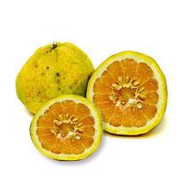 Ugli Fruit PNG-PlusPNG.com-200 - Ugli Fruit PNG
