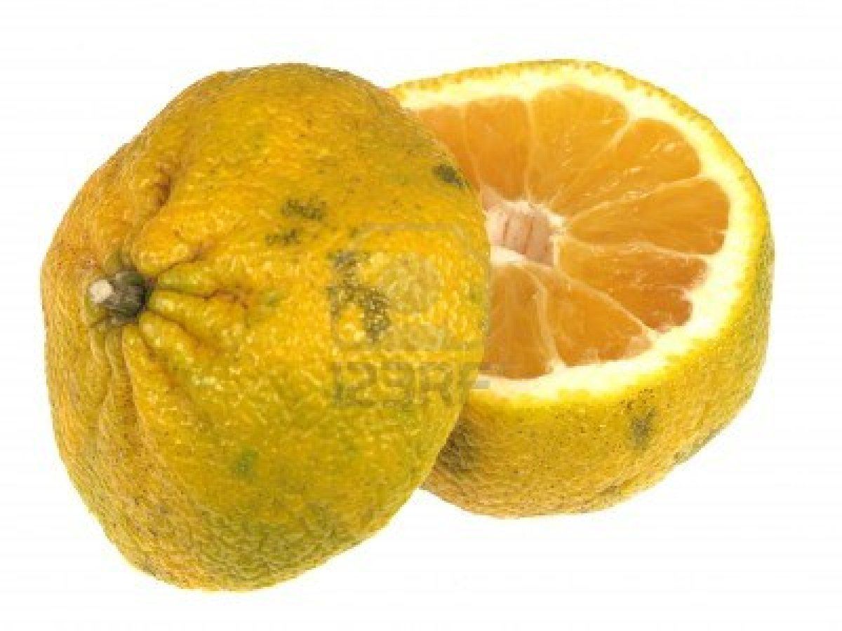 An ugli fruit (like a grapefruit) - Ugli Fruit PNG