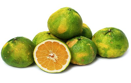 Fruits of ugli fruit - Ugli Fruit PNG