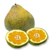 . PlusPng.com refreshing, but a bit unique tasting. Kind of like a sour orange citrus  flavor. Hereu0027s a picture of an ugli fruit for those that are unfamiliar. - Ugli Fruit PNG