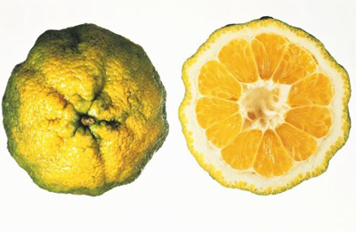 Ugli - Ugli Fruit PNG
