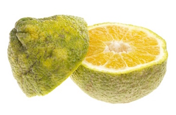 Ugli Fruit - Ugli Fruit PNG