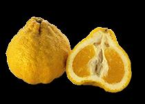 Ugli Fruit (Citrus reticulata x paradisi) - Ugli Fruit PNG