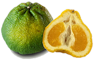 Ugli fruit / Tangelo - Ugli Fruit PNG