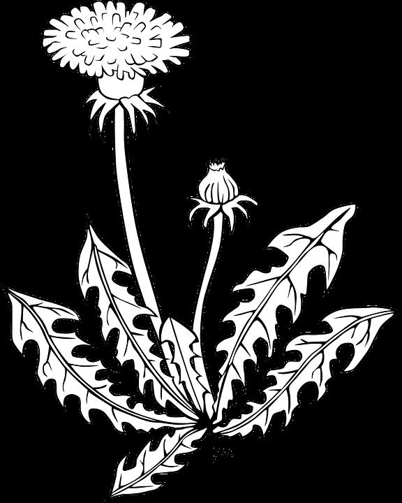 Blume, Löwenzahn, Strauch, Unkraut, Flora, Natürliche - Unkraut PNG