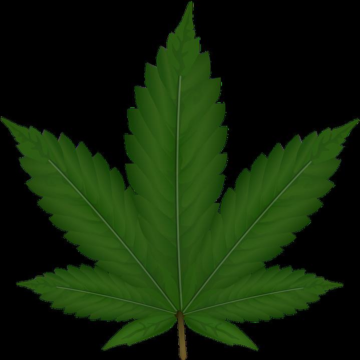 Cannabis, Hanf, Blatt, Unkraut, Reed, Grün, Nerven - Unkraut PNG