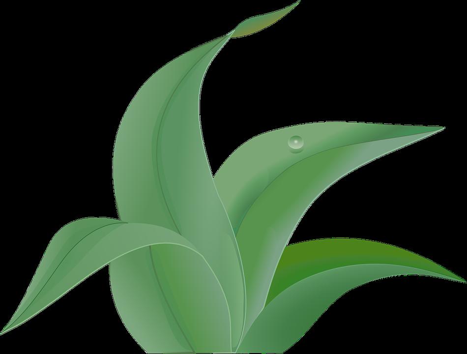 Grün, Grünen, Pflanzen, Blätter, Unkraut, Gras - Unkraut PNG