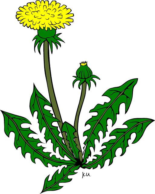 Kostenlose Vektorgrafik: Löwenzahn, Blume, Gelb, Pflanze - Kostenloses Bild  auf Pixabay - 31406 - Unkraut PNG