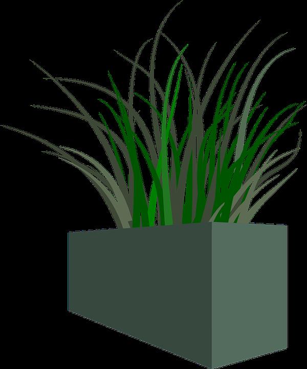 Topf, Gras, Pflanze, Unkraut - Unkraut PNG
