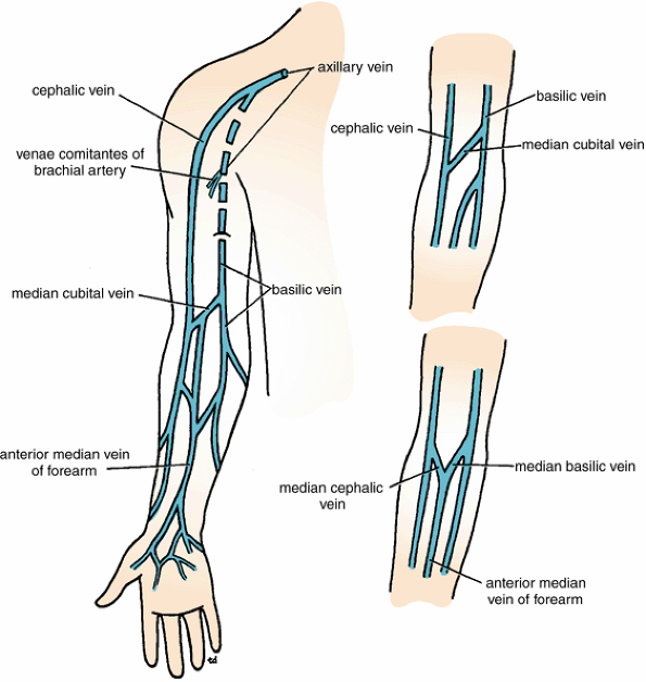 Upper Extremity Superficial Veins Diagram - Auto Electrical Wiring ...