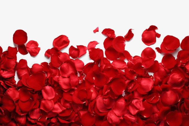 Rose petal, Red Rose Flower Closeup, Hd Big Picture, Valentineu0027s Day PNG  Image - Valentine Day HD PNG