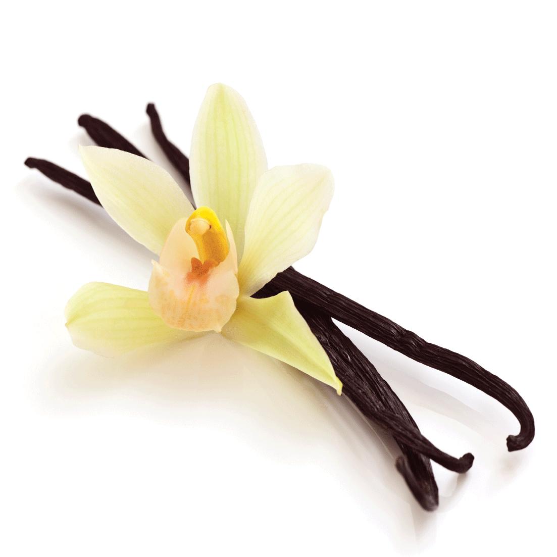 Vanilla PNG-PlusPNG.com-1103 - Vanilla PNG
