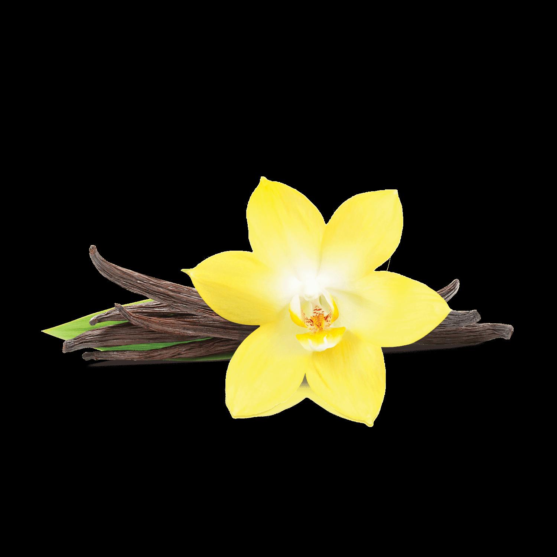 Vanilla PNG-PlusPNG.com-1500 - Vanilla PNG