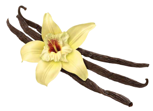 Picture: ISTOCK - Vanilla PNG