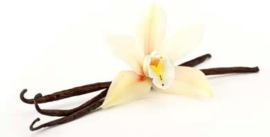 vanilla_beans - Vanilla PNG