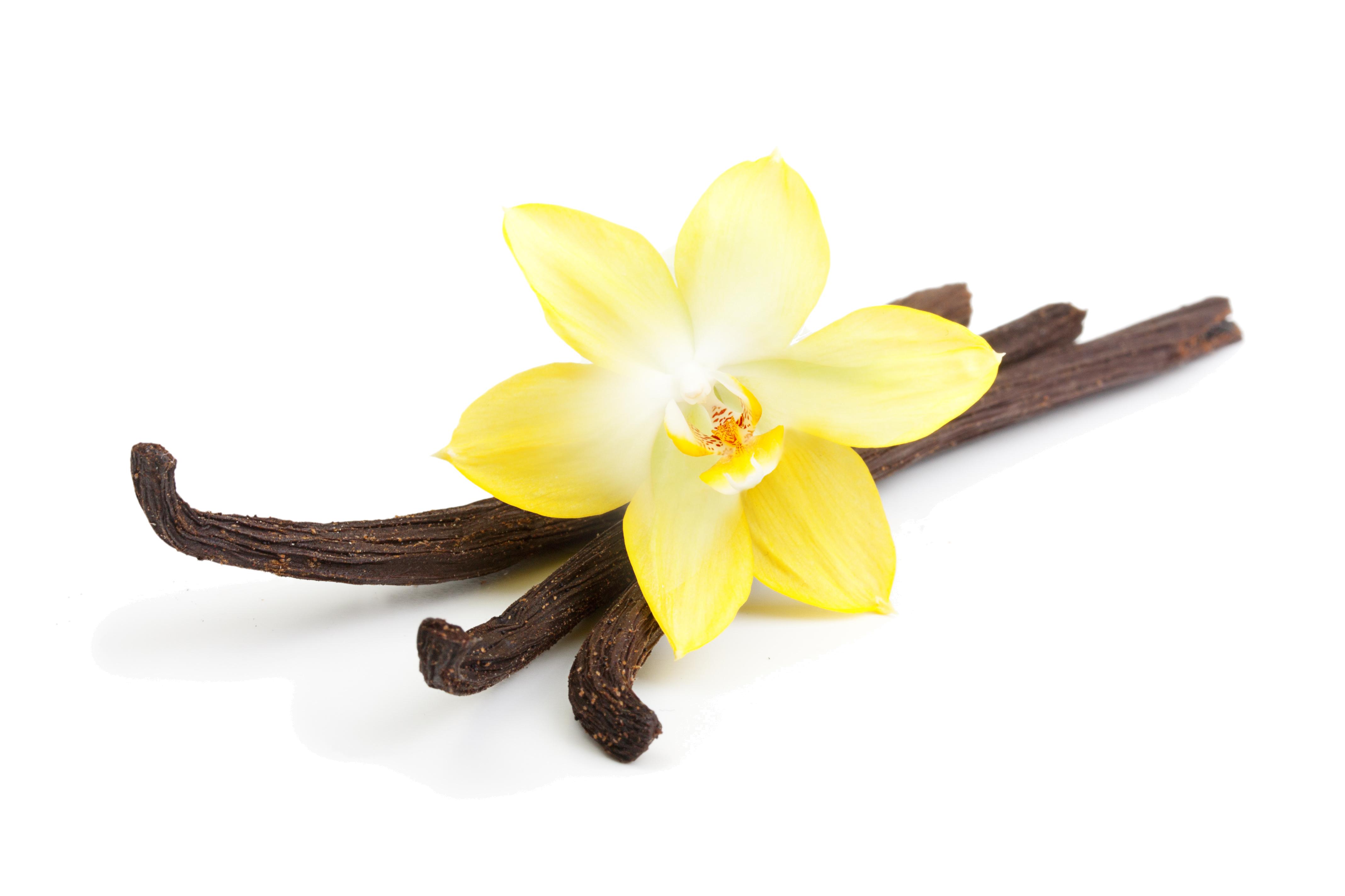 Vanilla.png PlusPng.com  - Vanilla PNG