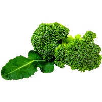 Green Broccoli Png Image PNG Image - Vegetable PNG