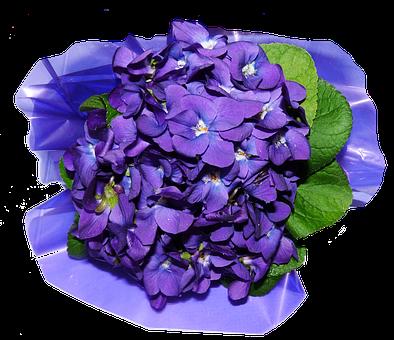 Blumen, Veilchen, Parfüm - Veilchen PNG