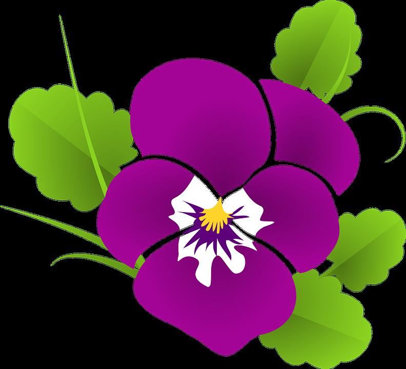 Stiefmütterchen, Veilchen, Viola, Violaceae, Blüte - Veilchen PNG
