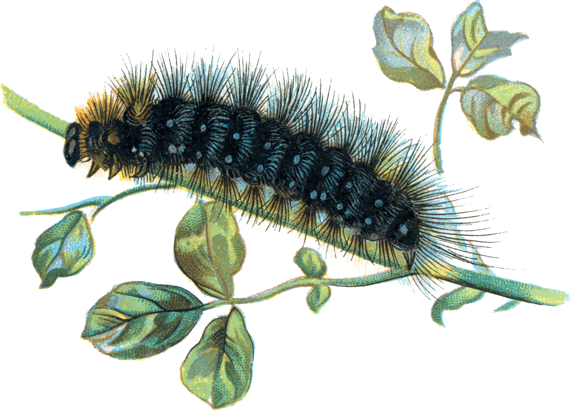 Very Hungry Caterpillar PNG - 56412