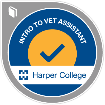 Explore the Exciting Role of Veterinary Assistants - Vet Assistant PNG