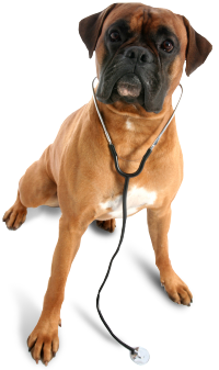 Pet Emergency? Call us right away at 718-833-0700! veterinarian_dog.png - Vet Clinic PNG