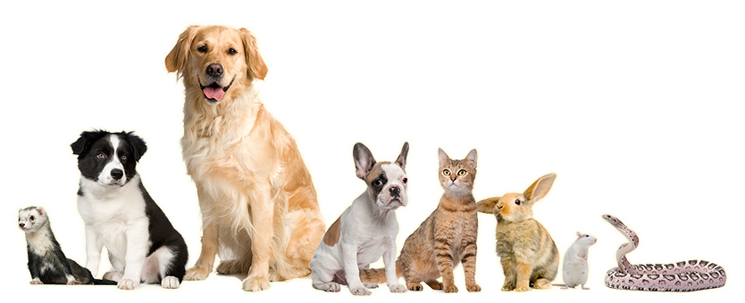 San Diego Bay Animal Hospital | San Diego Veterinary Clinic, San Diego Vet  Clinic, Vet San Diego.San Diego Bay Animal Hospital - Vet Clinic PNG