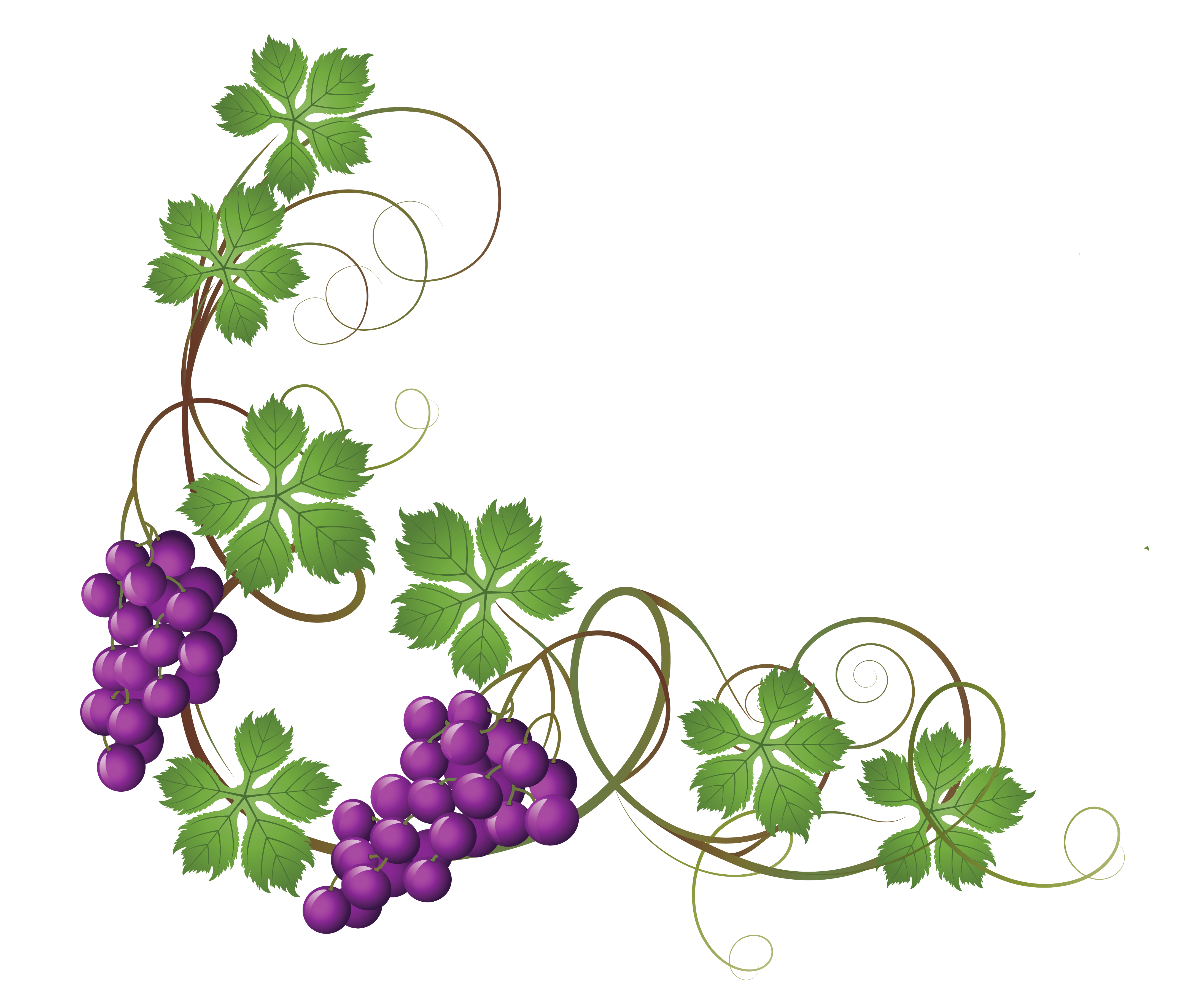 4340x3658 Transparent Vine Decoration PNG Clipart Pictureu200b Gallery - Vine And Branches PNG
