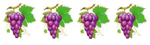 6 grape vine border - Vine And Branches PNG
