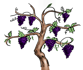 As we look at the vine and its branches, we see that they are one - Vine And Branches PNG