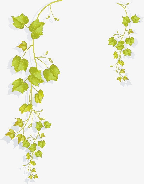 cartoon fresh vine branches, Cartoon, Fresh, Vine PNG and Vector - Vine And Branches PNG
