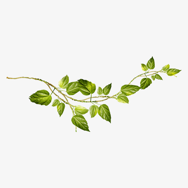 Vine And Branches PNG
