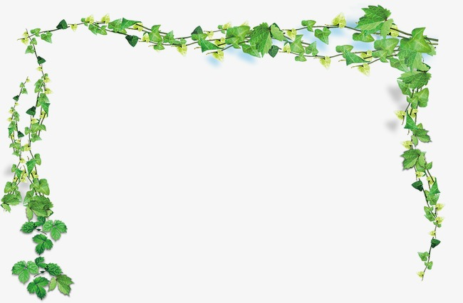 spring vine branches, Spring, Vine, Branch PNG and PSD - Vine And Branches PNG