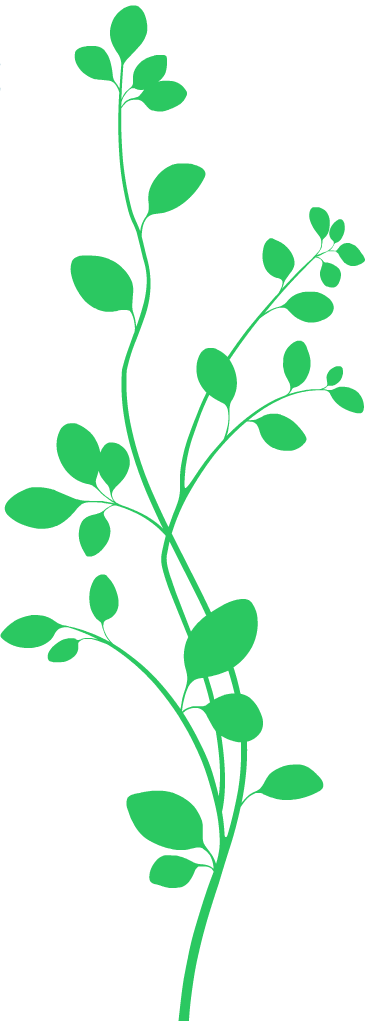 The Vine and Branches - Vine And Branches PNG