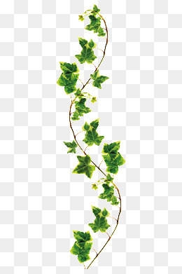 . PlusPng.com Vine, Branches PNG Image and Clipart. plant - Vine And Branches PNG