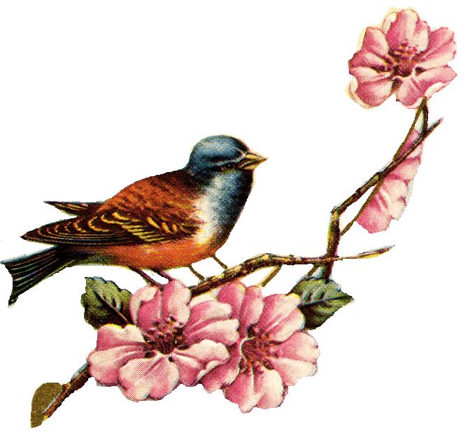 Vintage Love Birds PNG - 156531