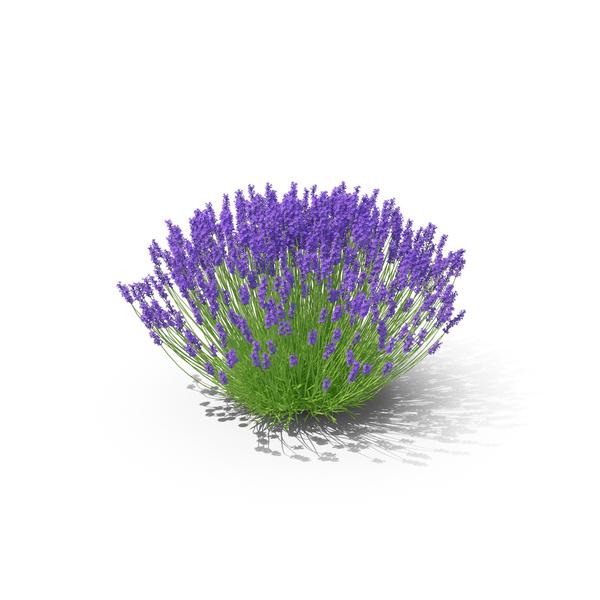 Lavender Bush Object - Violet Objects PNG