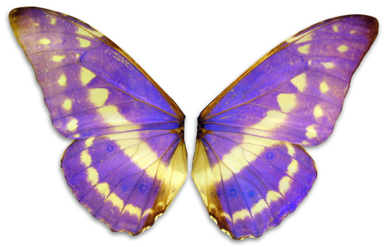 violet wings by Meltys-stock PlusPng.com  - Violet Objects PNG