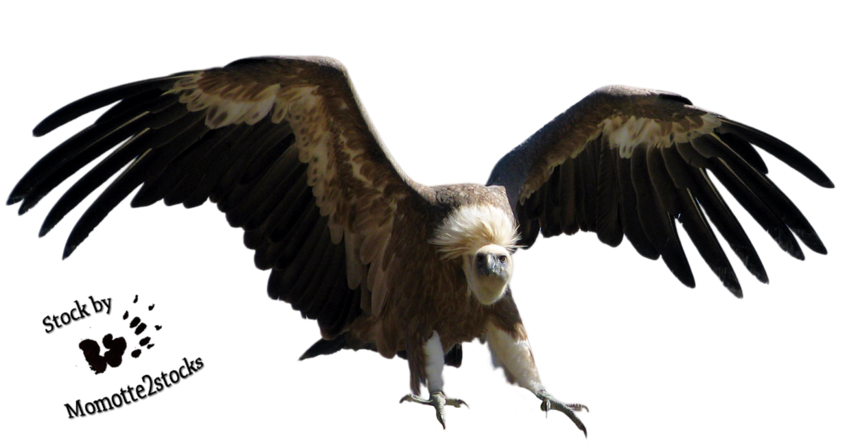 Cut-out stock PNG 12 - wings of the vulture by Momotte2stocks on DeviantArt - Vulcher PNG