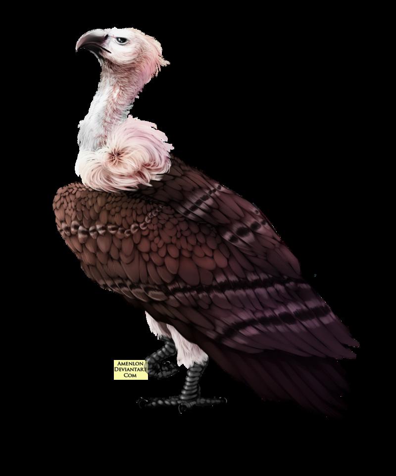 Vulture by SinteArkras PlusPng.com  - Vulcher PNG