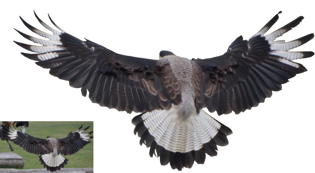 Vulture Png by lumpi69 PlusPng.com  - Vulcher PNG